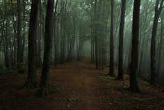 Look scary forest